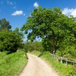 Stock Photo: Rural dirt road