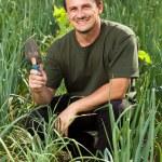 Gardener in an onion field, weeding — Stock Photo #11540125