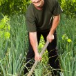 Gardener in an onion field, weeding - Stock Photo