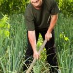 Gardener in an onion field, weeding — Stock Photo #11540149