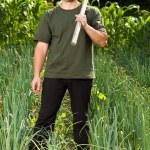 Gardener in an onion field, weeding — Stock Photo #11540154