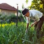 Old man weeding the garden — Stock Photo #11540176