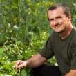 Farmer near field of broad beans plants — Stock Photo #11540181