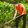 Young farmer weeding in a corn field - Stock Photo