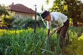 Old man weeding the garden — Stok fotoğraf
