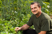 Farmer near a field of broad beans plants — Stockfoto