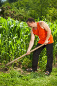 Young farmer weeding in a corn field — Stockfoto