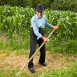 Senior farmer mowing the grass with scythe — Stock Photo