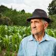 Senior farmer with a corn field in the background — Stock Photo #11688722
