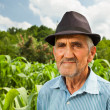Senior farmer with a corn field in the background — Stock fotografie