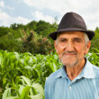Senior farmer with a corn field in the background — Stock Photo #11688733