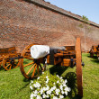 Canons near wall — Stock Photo