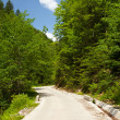 Stock Photo: Road through forest in mountains