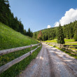 Road through forest in mountains — Stok fotoğraf