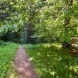 Trail in the forest — Stock Photo