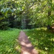 Trail in the forest — Stock Photo #12033963