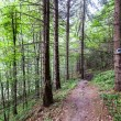 Stock Photo: Trail in the forest