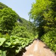 Road through forest in mountains — Stock Photo