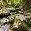 Stock Photo: Canyon with mossy boulders