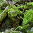 Huge mossy boulders — Stock Photo