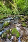 Förtrollade skogen — Stockfoto