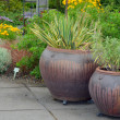 Two garden pots — Stock Photo