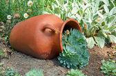 Clay planter in garden — Stock Photo