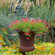 Colorful garden planter — Stock Photo