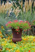 Colorful garden planter — Stock Photo