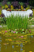 Water garden — Stock Photo
