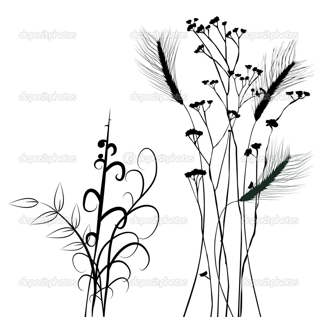 Collection for designers, plant vector - set  Stock Vector #11637679