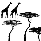 African animals, giraffe, vector silhouettes — Stock Vector