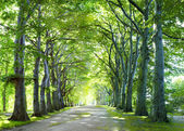 The way in forest — Stock Photo