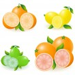 Set of citrus orange lemon lime grapefruit vector illustration - Stock Vector