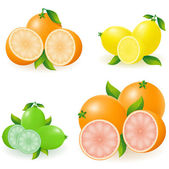 Set of citrus orange lemon lime grapefruit vector illustration — Stock Vector