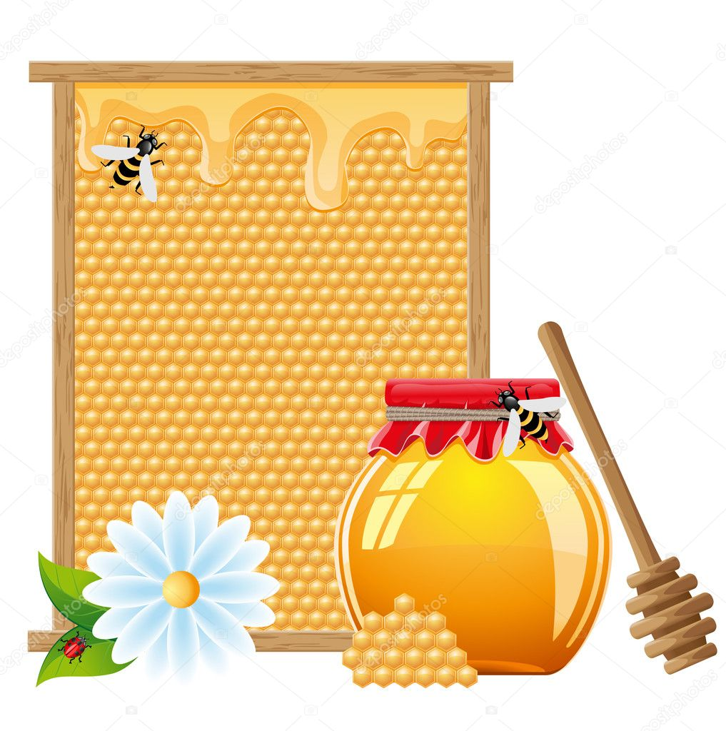Natural honey vector illustration isolated on white background  Stock Vector #11673274