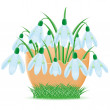 Snowdrops are in egg shell illustration — Stock Photo