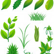 Icon set of green leaves and plants for design — Stock Photo