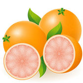 Grapefruit illustration — Stock Photo
