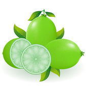 Lime illustration — Stock Photo
