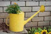 Old watering in garden design — Stock Photo