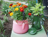 Old kettles used in garden design — Stock Photo
