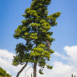 Nice tree — Stock Photo