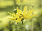 Yellow flower mood — Stock Photo