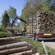 Loading Timber — Stock Photo
