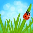 Ladybug on wet grass — Stock Vector