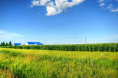HDR Corn field farm and sky — Стоковое фото