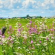Summer landscape in rural Canada - Stock Photo