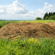 Chicken manure heap — Stock Photo