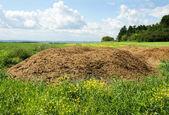 Chicken manure heap — Stock Photo